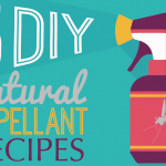 Best Natural DIY Bug Repellant Recipes
