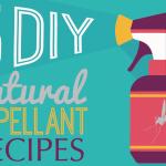Best Natural DIY Bug Repellant Recipes