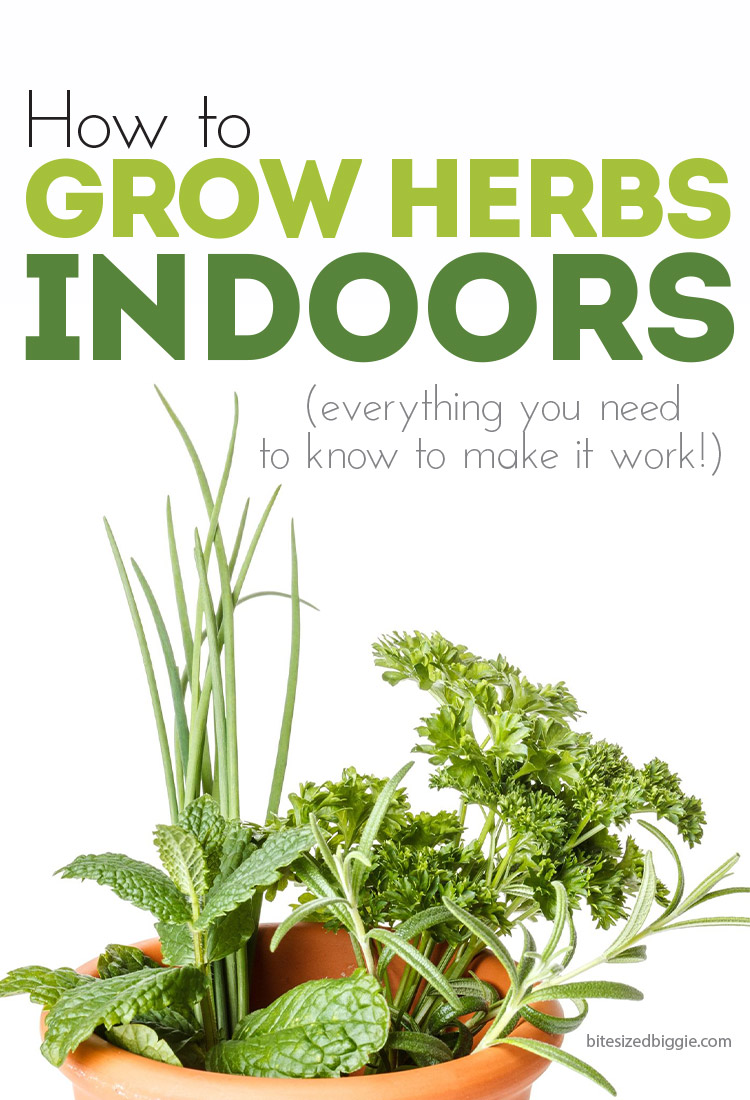 How to grow herbs INDOORS! Which ones grow well indoors, where to put them, how to plant them!