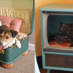Purr-fect DIY Cat and Dog Bed Ideas