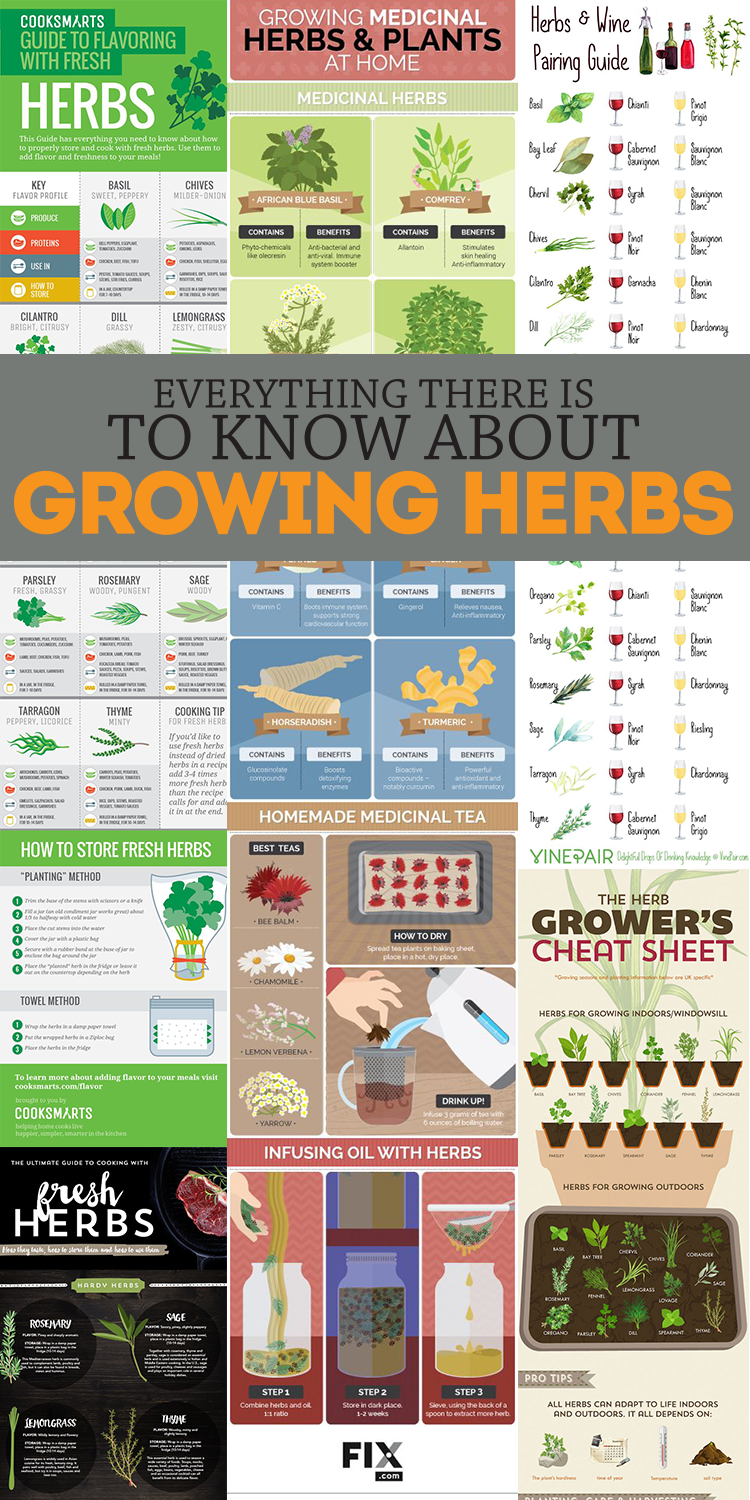 Everything you need to know about growing herbs in handy infographic form! So helpful!