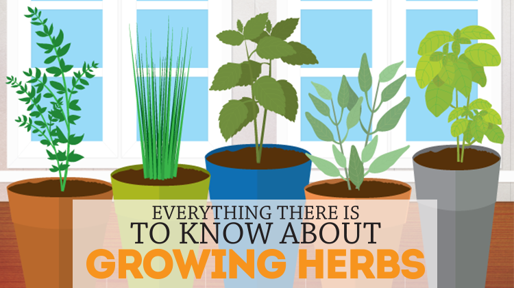How to Grow an Herb Garden Bite Sized Biggie